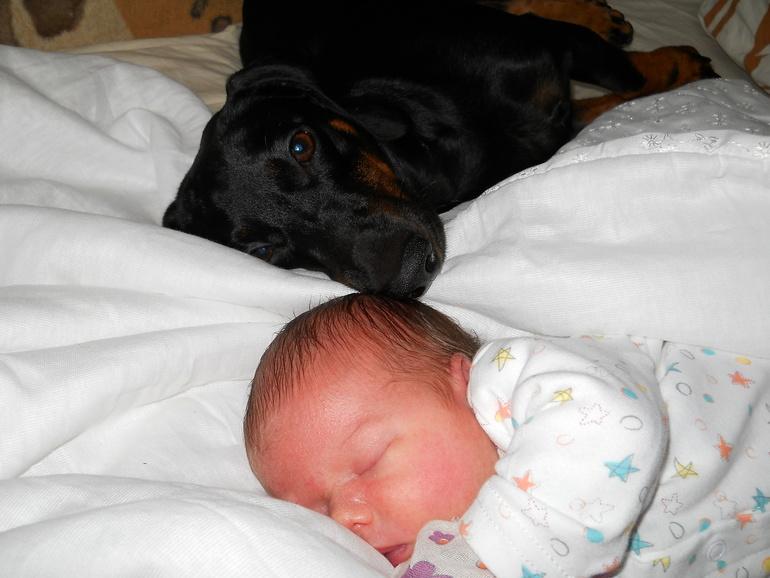 аллергия на роял уринари у собак