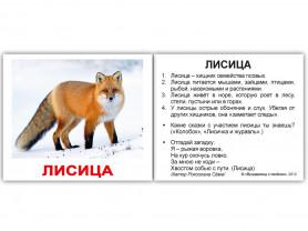 """Набор карточек МИНИ-40 """"Дикие животные"""" с фактами"""