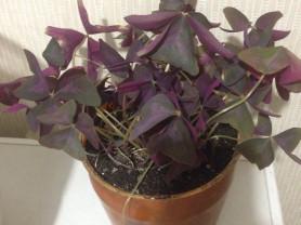 баттерфляй микс фиолетового и зеленого