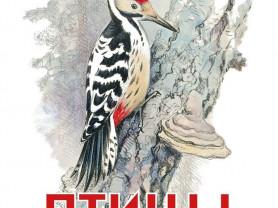 Птицы (книжка-картинка) Художник Комаров