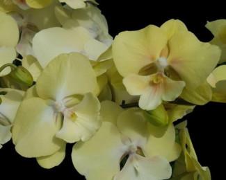 Орхидеи, горшки,грунт, удобрения