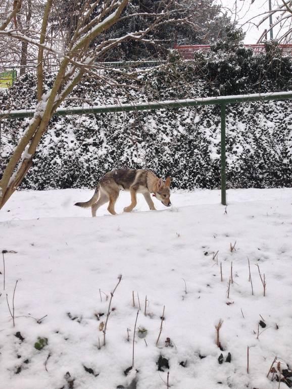 И к нам пришла зима :)