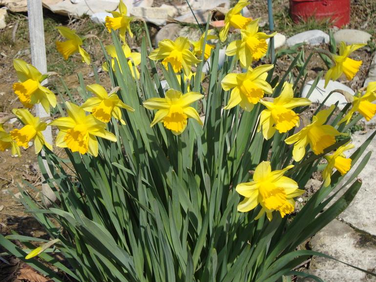 Весна продолжается!