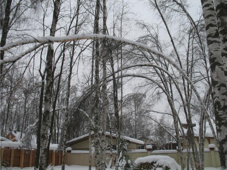 Зима: время для обрезки, кронирования и спила деревьев