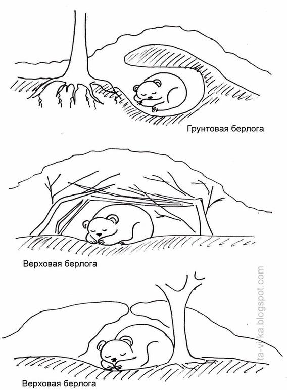 Раскраска берлоги