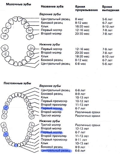 Молочных зубов у детей сроки и схема