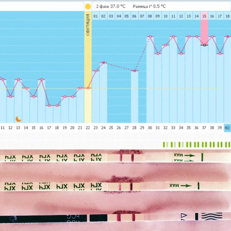 Ура мой график беременный беременность в 40 53