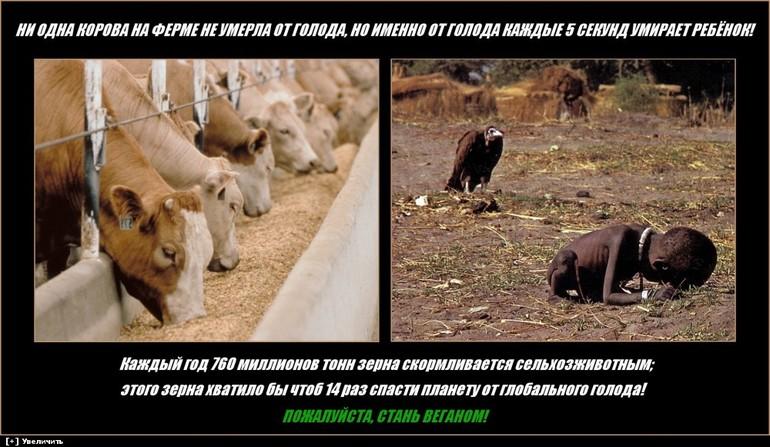 Экология: смерть от голода. Веганство.