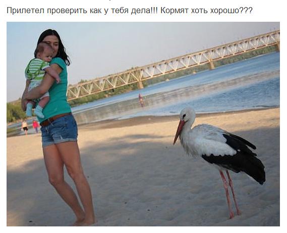 Аист))