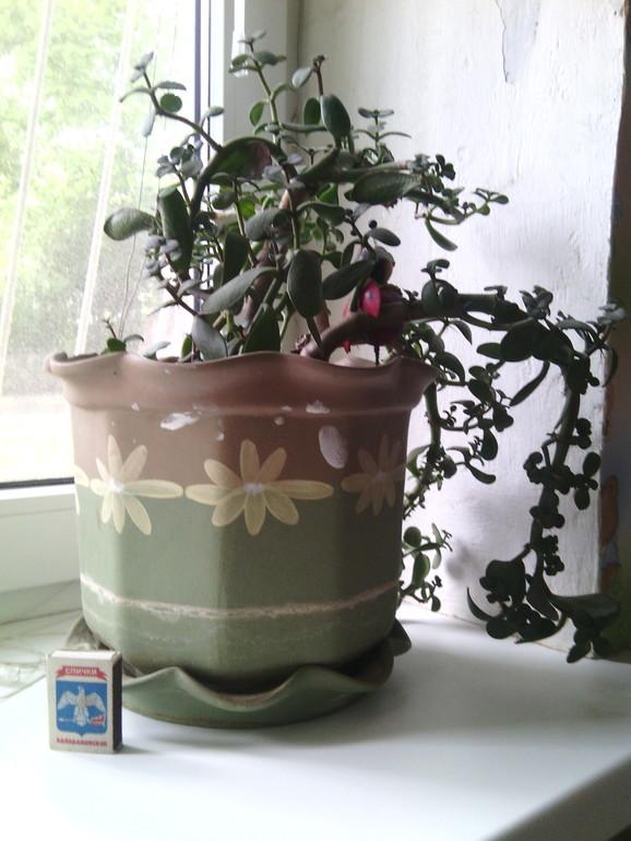 чтр с моим денежным деревом