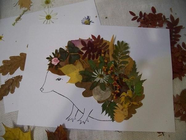 Гербарий из листьев своими руками фото