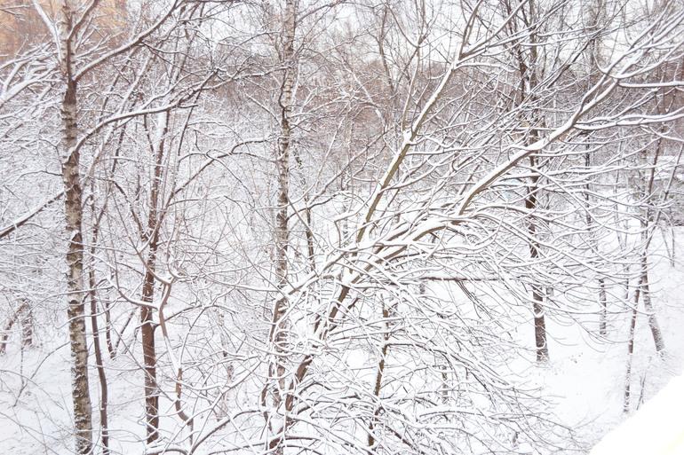 А из нашего окна, осень снежная видна :-)