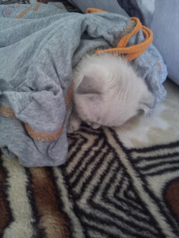 картинки котик болеет