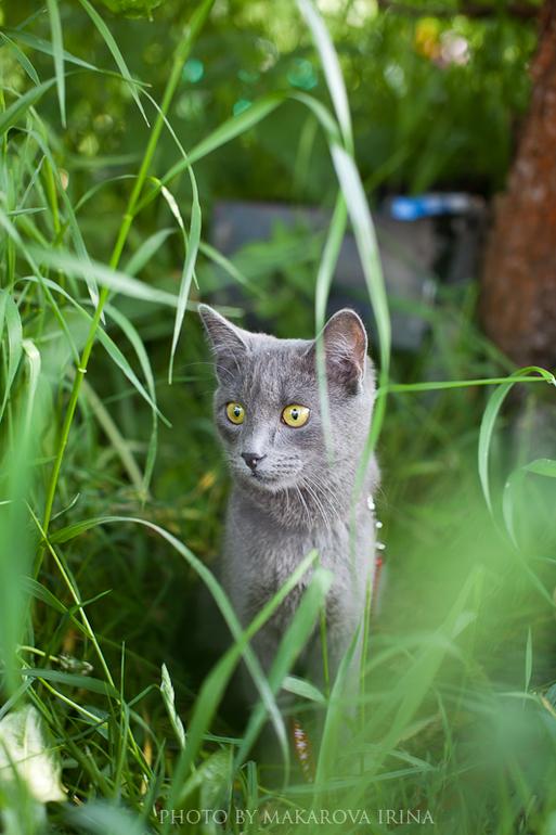 Кот в дикой природе :)