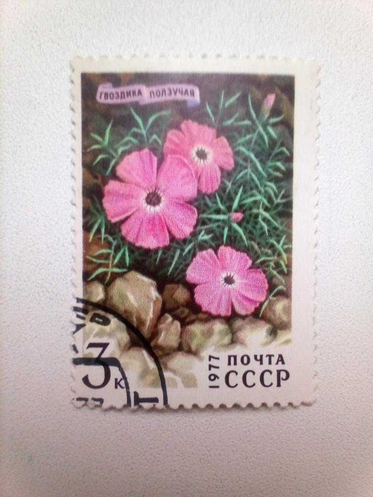 Марка 3к 1977 год СССР Гвоздика Ползучая