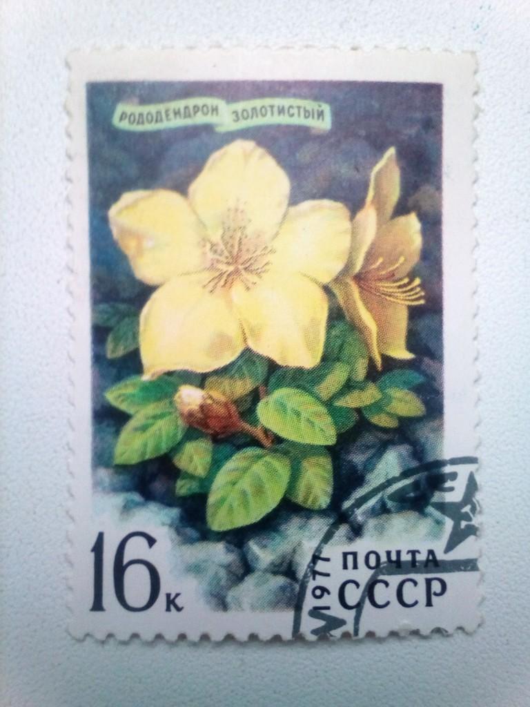 Марка 16к 1977 год СССР Рододендрон Золотистый