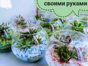Выездной мастер-класс по созданию флорариума.