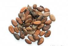 250 гр Какао-бобы сорта Форастеро, неочищенные, отборные