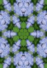 Фотообои Цветочный калейдоскоп