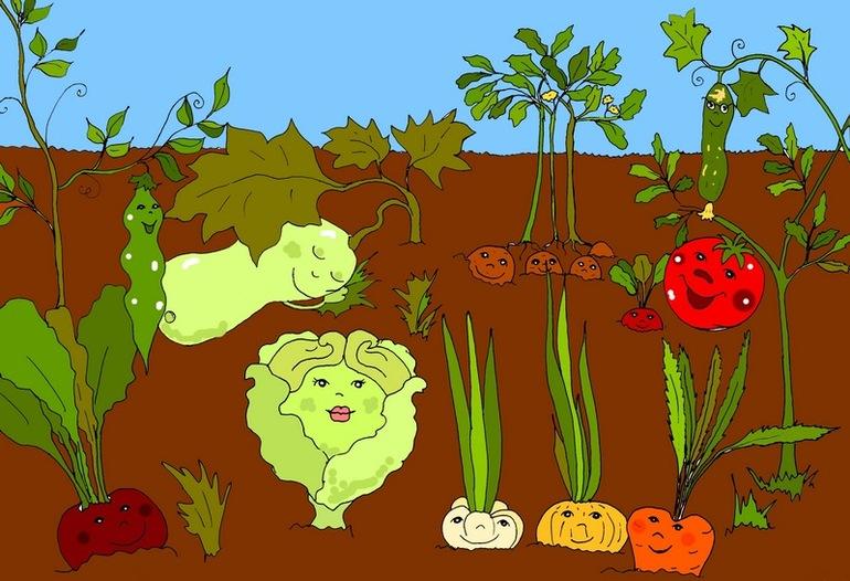 Овощи на огороде картинка для детей