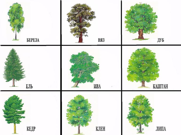 Бисер деревья фото образом, свит