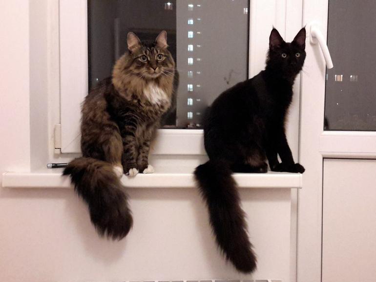 Классный черный кот