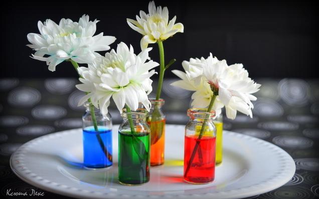 Можно окрашивать живые цветы купить комнатные цветы в н новгороде на авито